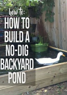 Instructions for building a backyard pond with no kit and no digging required - Modern Design Backyard Ducks, Chickens Backyard, Backyard Ponds, Koi Ponds, Backyard Waterfalls, Garden Ponds, Backyard Aquaponics, Backyard Farming, Patio Pond