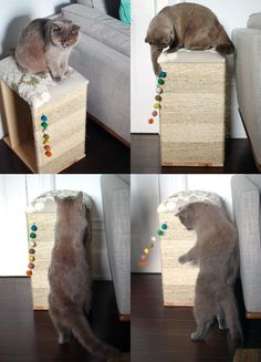 Super Ideas For Modern Cat Furniture Diy Scratching Post Cat House Diy, Diy Cat Bed, Diy Cat Toys, Cat Hacks, Ideal Toys, Cat Scratcher, Cat Room, Small Cat, Cat Furniture
