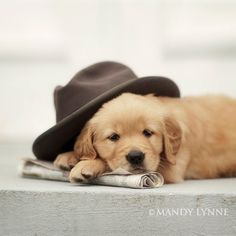Puppy with Newspaper and Fedora Hat