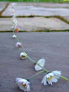 We made endless daisy chains.