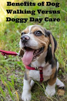 If you are considering hiring a dog walker or taking your dog to doggy day care, check out our latest article, Benefits Of Dog Walking Versus Doggy Day Care. Which option do you prefer?