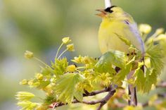 Plant these native trees to attract more birds to your backyard.