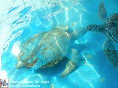 Tortugota en Isla Mujeres