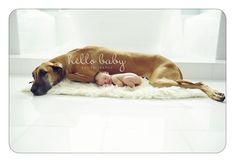 great danes and newborn babies - Google Search