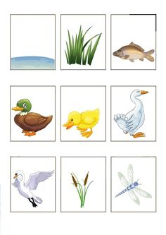 "Word cards for children, themed ""the kleuteridee. Ocean Diorama, Learn Dutch, All About Water, Dutch Language, Pond Life, Daycare Crafts, Exercise For Kids, Primary School, Kids Learning"
