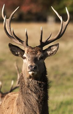 buck. I've never seen one in real life. I know that they are up there, but I would want to see one!