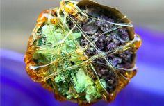 cannabis Learn How To Grow Weed Growing Weed, Marijuana Recipes, Weed Pictures, Marijuana Plants, Ganja, Herbalism, Plants