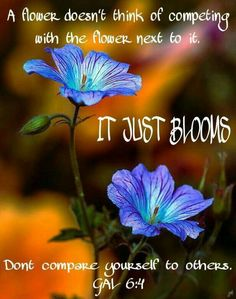 A flower doesn't think of competing with the flower next to it. It just blooms. Don't compare yourself to others. Galatians 6:4.