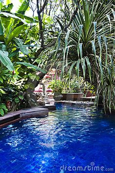 Tropical swimming pool by Snapper, via Dreamstime