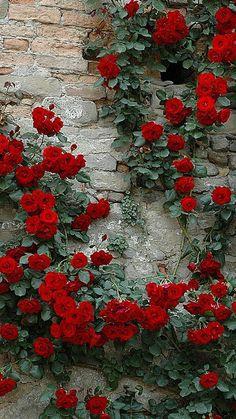 Untitled Planta Vascular, Vascular Plant, Garden Wallpaper, Flower Wallpaper, Beautiful Flowers Wallpapers, Pretty Wallpapers, Most Beautiful Flowers, Exotic Flowers, Rare Flowers