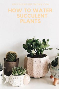 Watering is the major issue for succulents. If you overwater, no matter how good your soil mixture you can kill the plant easily. This free guide will help you to learn proper watering methods! Watering Succulents, How To Water Succulents, Planting Succulents, Plant Guide, Plant Care, Planter Pots, Gardening, Canning, Plants