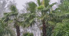 Weather Phuket forecasts, - Phuket FM Radio Atmospheric Circulation, Postcard Art, Water Resources, Phuket Thailand, Holiday Destinations, Monsoon, Southeast Asia, Amazing Art, Environment