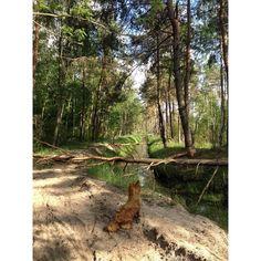 #fidest #ruda #bobry #isolation #dog #alone #river #summer #trees #beaversjob #forrest #woods #nature #tree #plants #natureart #greenery #plant #animal #animals #ginger #sun #shadow #weekend #leisure #cute #kawaii #fauna #flora #poland by plizgeczczi