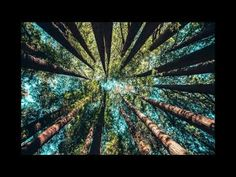 Birds chirping in the forest 1 hour - YouTube Nature Sounds, Meditation, Birds, Youtube, Bird, Youtubers, Youtube Movies, Zen