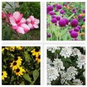 If you love the vibrant hues of summer flora, check out these dozen no-fail flowering plants that will bloom all season long