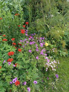 the blackberry garden: Transitoriness