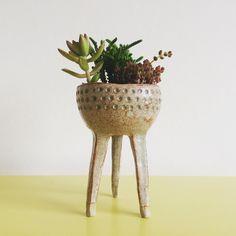 #sharonelphick #succulents #pinchpots #ceramics #turningearth