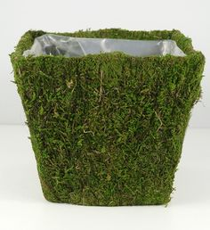 "6.5"" square pot covered with preserved green moss. Stands 6"" tall."