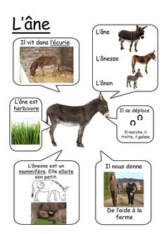 Ane - animaux de la ferme animals silly animals animal mashups animal printables majestic animals animals and pets funny hilarious animal French Teacher, Teaching French, How To Speak French, Learn French, Core French, French Education, French Classroom, French Resources, French Immersion