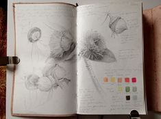 Dianne Sutherland: Sketchbook Travels no. Botanical Drawings, Botanical Art, Botanical Illustration, Dark Drawings, Graphite Drawings, Drawing Lessons, Drawing Tips, Art Diary, Artist Sketchbook