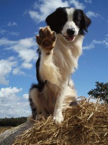Image result for dogs high fiving