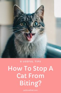 It is quite natural for a cat to bite your hand because she is trying to understand her surroundings. You should train her to stop biting others. Kittens Cutest, Cats And Kittens, Cute Cats, Cat Biting, Cat Care Tips, Cat Behavior, All About Cats, Cat Health, Cat Love