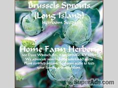 Brussels Sprout Long Island Catskill Heirloom Seeds, Order now in New York NY - Free New York SuperAds