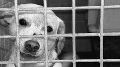 Para las perreras municipales de algunos estados de México, los perros callejeros son un problema que debe ser eliminado de raíz.