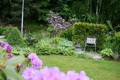 Purple in my garden. Lindas trädgårdsblogg