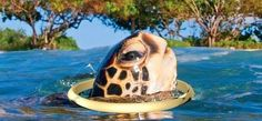 Imagine you are a blind turtle. You live in a very deep ocean. The dark water has been your home for one hundred years. For all this time you have never gone to the surface of the water. Master Oogway, Children And Family, Buddhism, The Darkest, Cowboy Hats, All About Time, Turtle, Waves, Activities