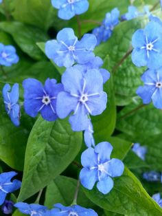 Blue flowers are beautiful♡