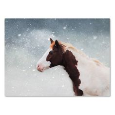 "Trademark Art 'Paint Horse in the Snow' Graphic Art Print on Wrapped Canvas Size: 24"" H x 32"" W"
