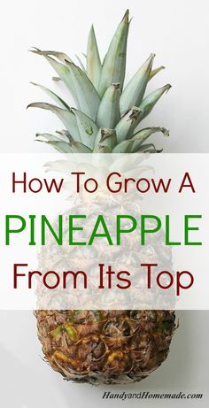 how to grow a pineapple from its top in water