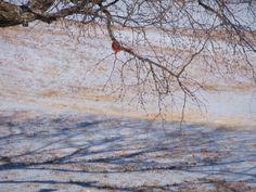 Snow & Ice! Cold on The Broken Road Farm! www.laurenboehmlynch.com