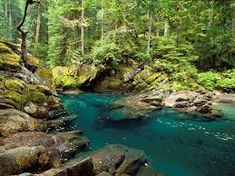Rainier National Park - One of my favorite places to go camping in my local area! I LOVE the hike to the Grove of Patriarchs the waterfall. Oh The Places You'll Go, Places To Travel, Places To Visit, Camping Places, Travel Destinations, Columbia River Gorge, Yasmine Galenorn, Washington Beaches, Washington State