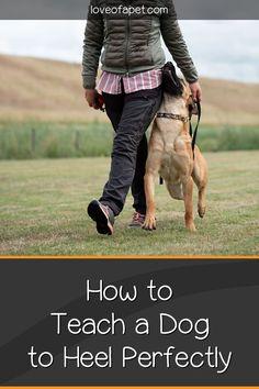 Puppy Training Tips, Training Your Dog, Dog Obedience Training, Labrador Puppy Training, Dog Commands Training, Service Dog Training, Training Pads, Agility Training, Dog Training Techniques