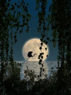Heron and the Moon.