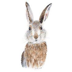 Baby Rabbit Portrait