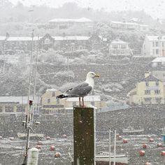British Isles, Hedges, Cornwall, Bald Eagle, Coastal, Chips, Bring It On, Bird, Holiday