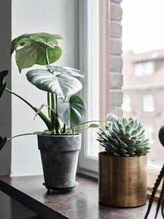 13 pomysłów na roślinne aranżacje w Twoim mieszkaniu