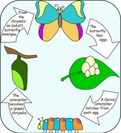 The Very Hungry Caterpillar book activity. I tried this with kindergarteners and they loved it!