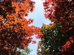Red Sky 楓紅