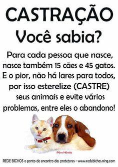 Fica Cãomigo: Por que há tantos cães e gatos abandonados?