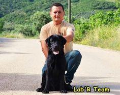 Dog Show, Labrador Retriever, Turkey, Dogs, Animals, Labrador Retrievers, Animales, Turkey Country, Animaux