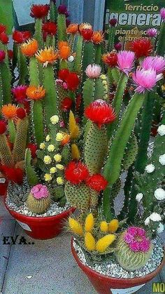 How To Use Succulent Landscape Design For Your Home Flowering Succulents, Cacti And Succulents, Planting Succulents, Cactus Plants, Planting Flowers, Mini Cactus Garden, Cactus Flower, Succulent Landscaping, Succulent Gardening