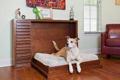'The Leo': Modern Mahogany Fold-out Pet Bed:  With 85 lb Dog modern-pet-care
