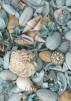 """One cannot collect all the beautiful shells on the beach."" Anne Morrow Lindbergh (with only a few exceptions, all ""shells"" belong to someone else)"