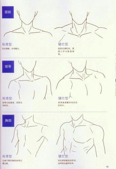 Shoulder and neck reference