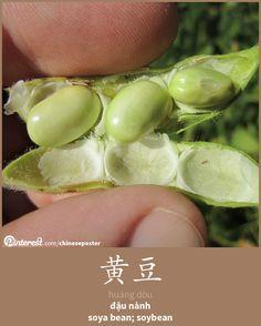 黄豆 - huáng dòu - đậu nành - soybean