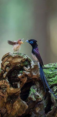 A wonderful photo of mama bird feeding her baby, and what IS this beautiful bird?!